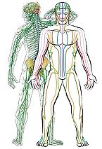 Acupuncture manche