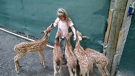 Doe fawns for sale | buck fawns for sale