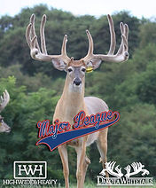 Major League Buck picture