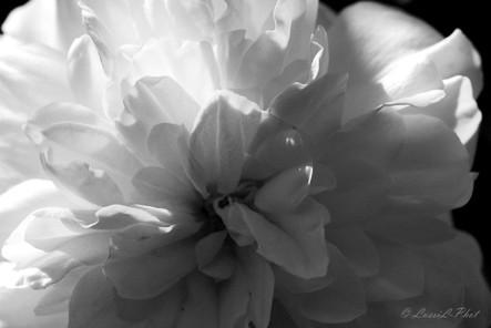 flore rose NB.jpg