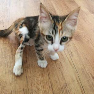 גם חתולים מקבלים טיפול פיזיותרפי