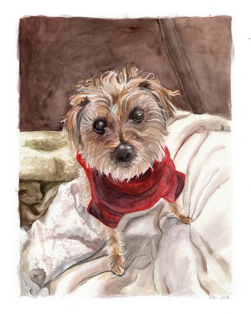 Pet Portrait No. 7
