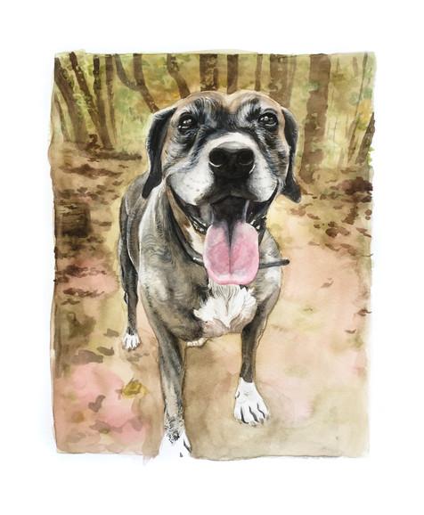 Pet Portrait No. 5