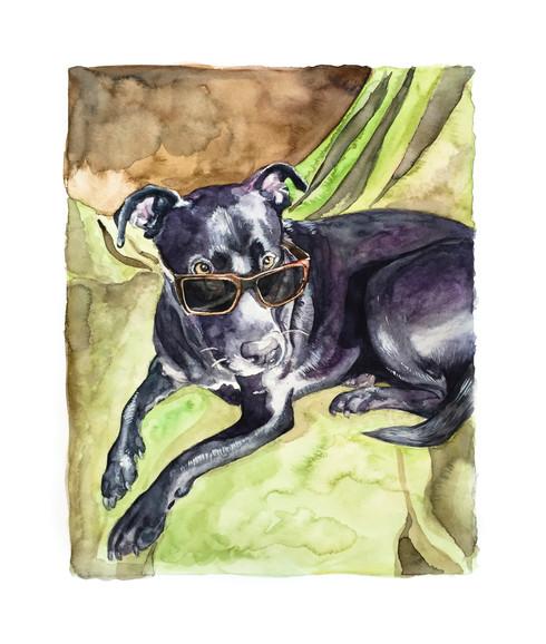 Pet Portrait No. 6