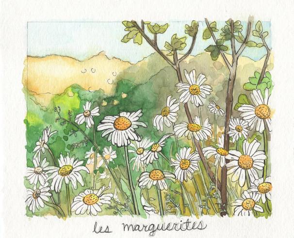 Les Marguerites