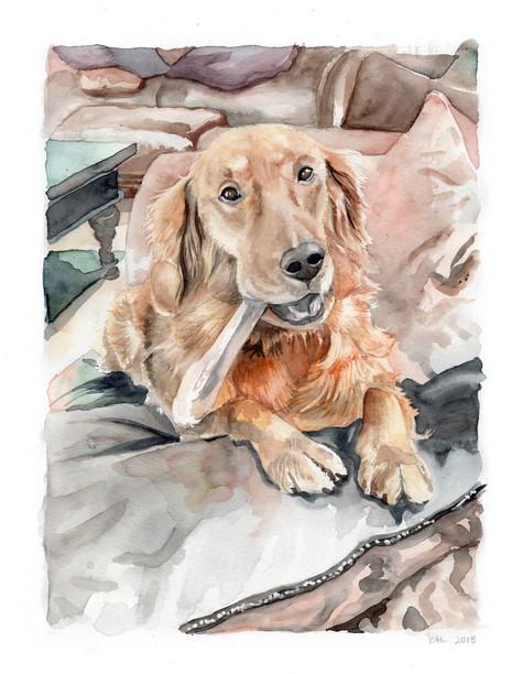 Pet Portrait No. 8