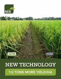 NEB Intro Book, MAR2021, v49, ENGLISH_Pa