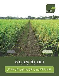 NEB Intro Book, APR2021, EGYPT, v47_Page