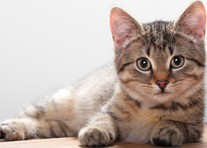 Companion animals drive Sales in Q1' 2015; Future may not be Food Animals!