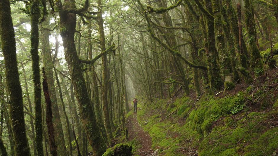 Kirwans' Loop Track: A Sick Adventure