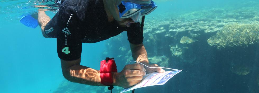 Reef Survey.jpg