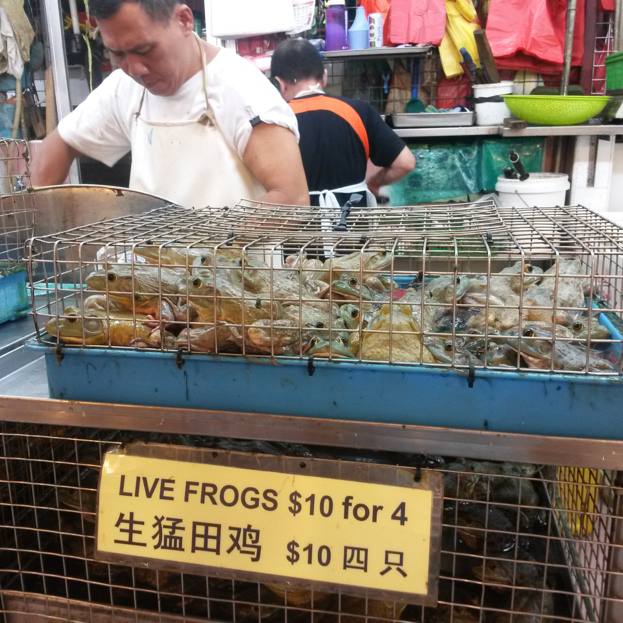 Photo 4. Live frogs sold at Chinatown market, Singapore