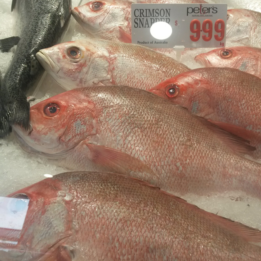 Photo 10. 'Crimson snapper' for sale in Sydney Fish Market