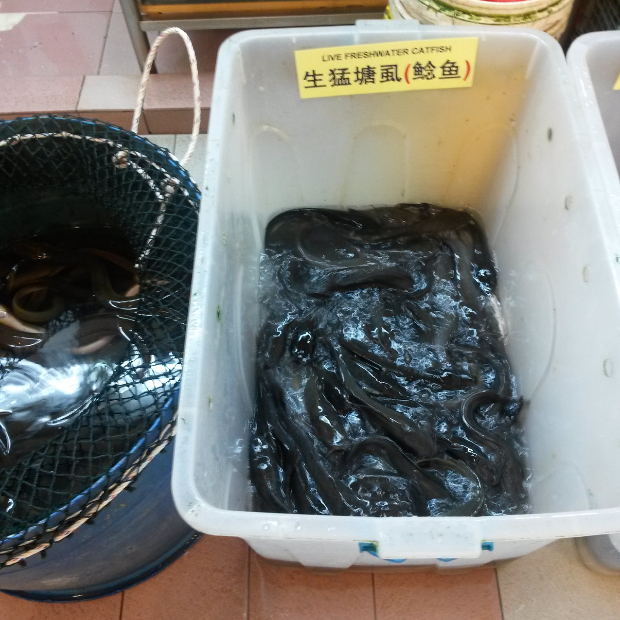 Photo 3. Live catfish sold at Chinatown market, Singapore