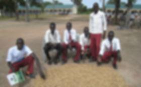 Abukloi students harvest groundnuts