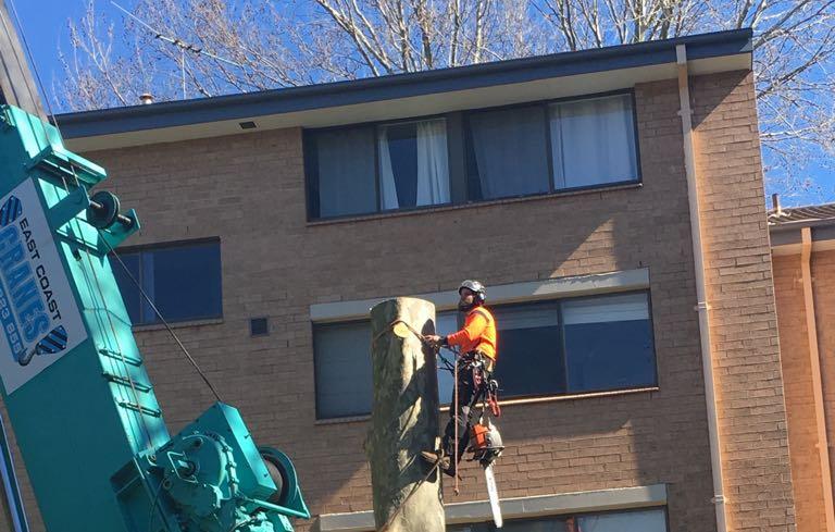 Emergency Hickey Tree Service.jpg