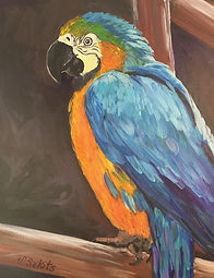 Blue and Gold Macaw acrylic 20x24 F 600.