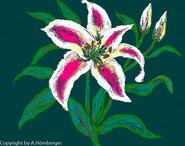Lilie mit grünem Hintergrund