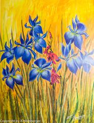 Iris blau -gelb