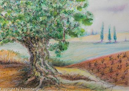 Olivenbaum in Spanien