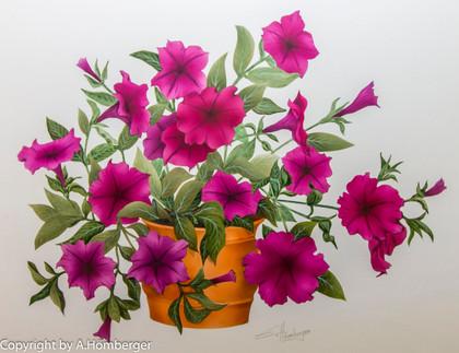 Blumen Petunien