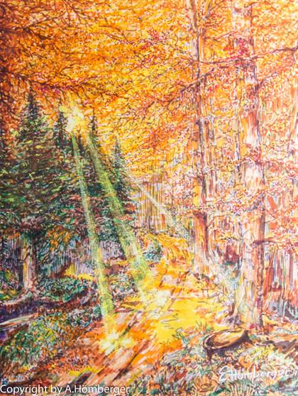 Lichtspiel Sonne im Herbst