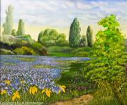 Iris im Eriskircher Ried