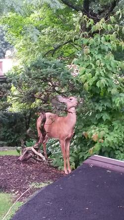 Home Sweet Deer