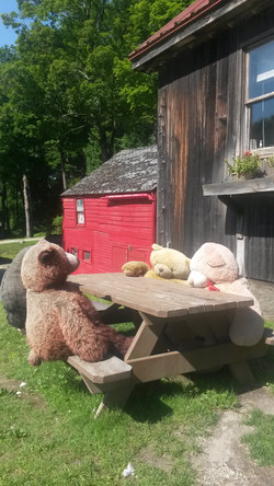 Breakfast with Bears