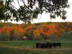 Stone Barns in Fall