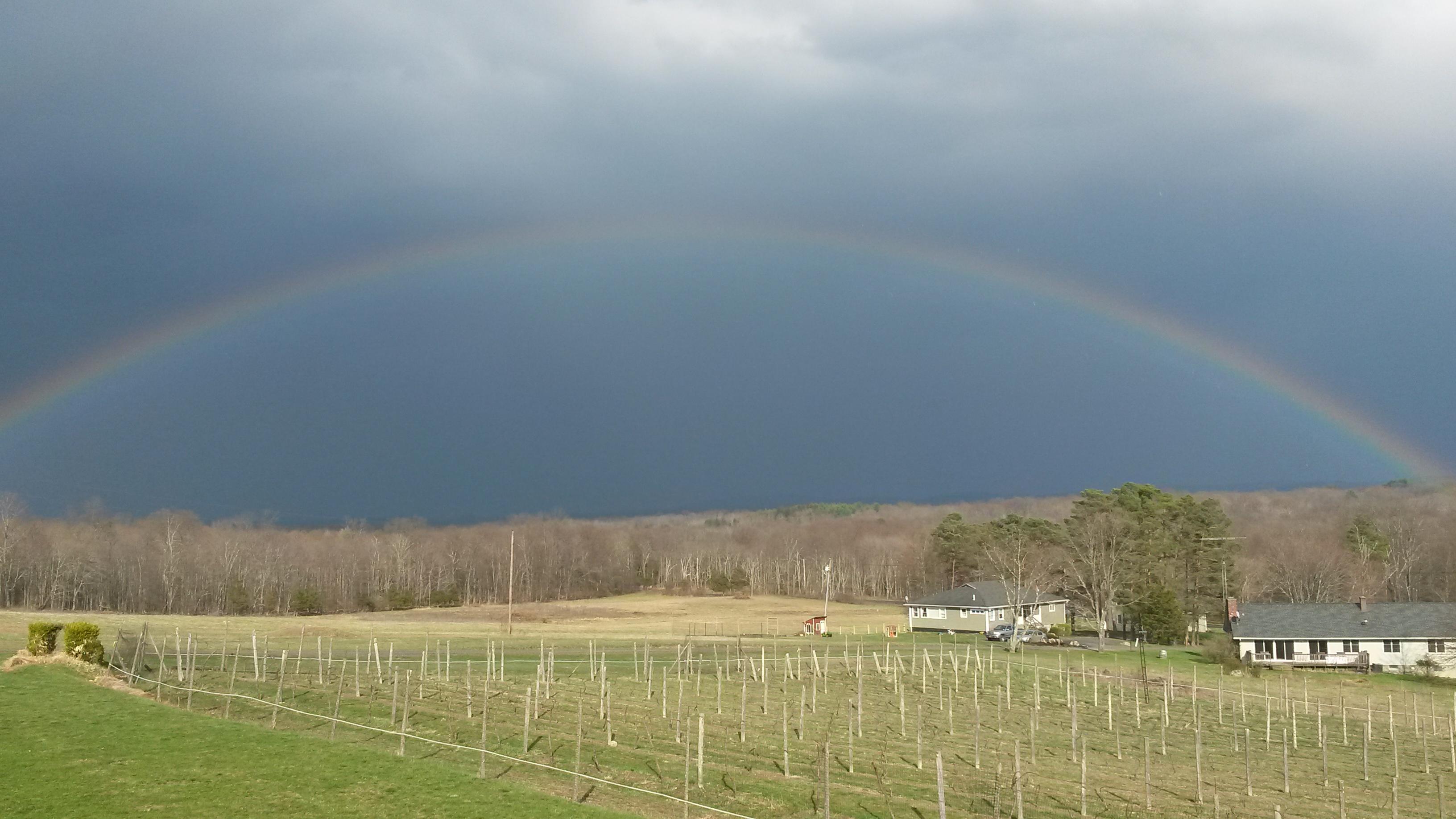 Over the Vineyard Rainbow