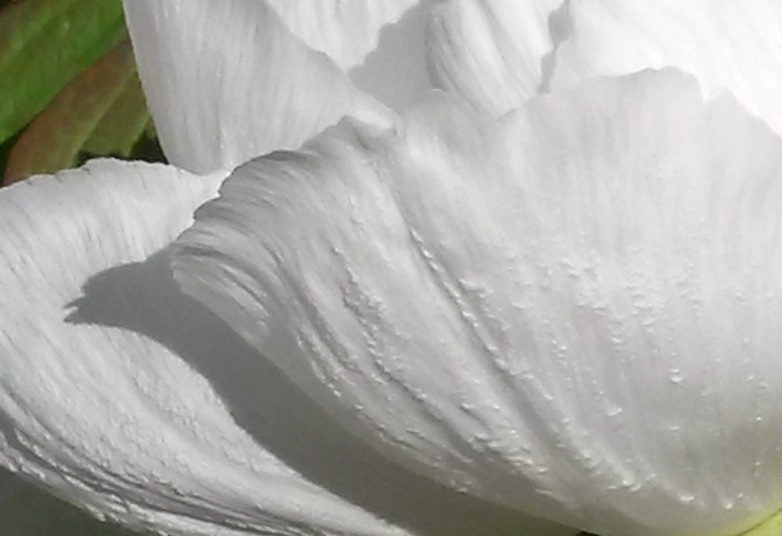 Springtime Closeup