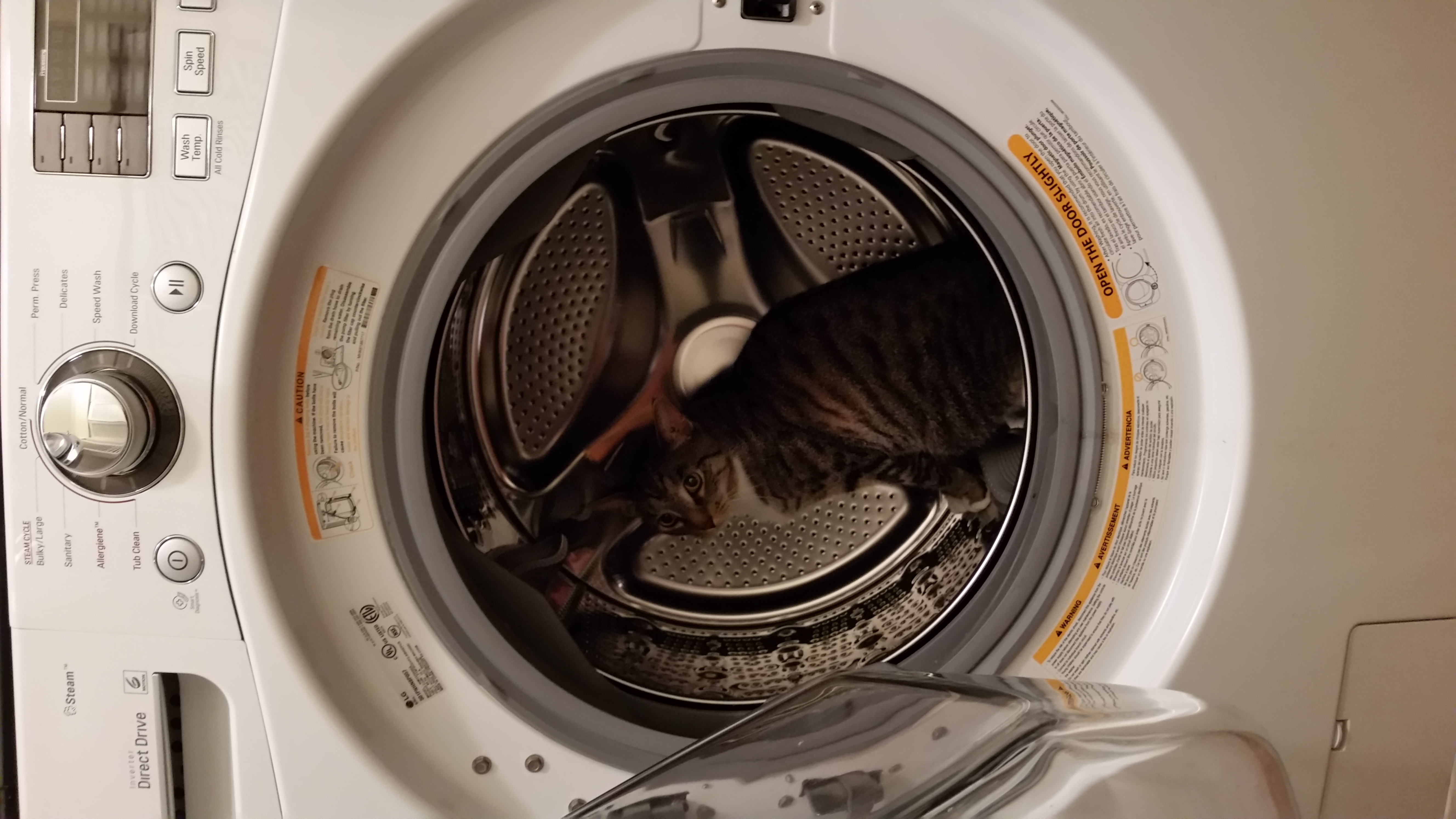 Kitty and laundry