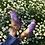 Thumbnail: Lolita Sandals