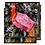 Thumbnail: Pink Sky