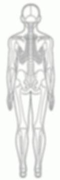 腰痛肩こり頭痛を整える整体骨格図