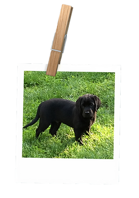 polaroid_2_puppy.png