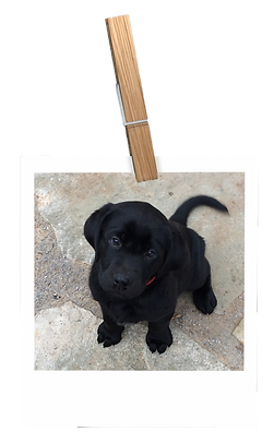 polaroid_4_puppy.png