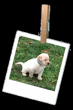 polaroid_1_puppy.png
