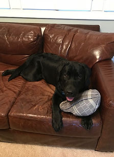 Bear on Sofa #2.jpeg