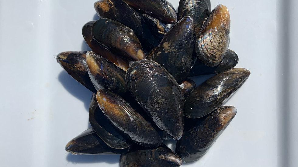 Scottish Mussels (Mytilus Edulis) 1kg