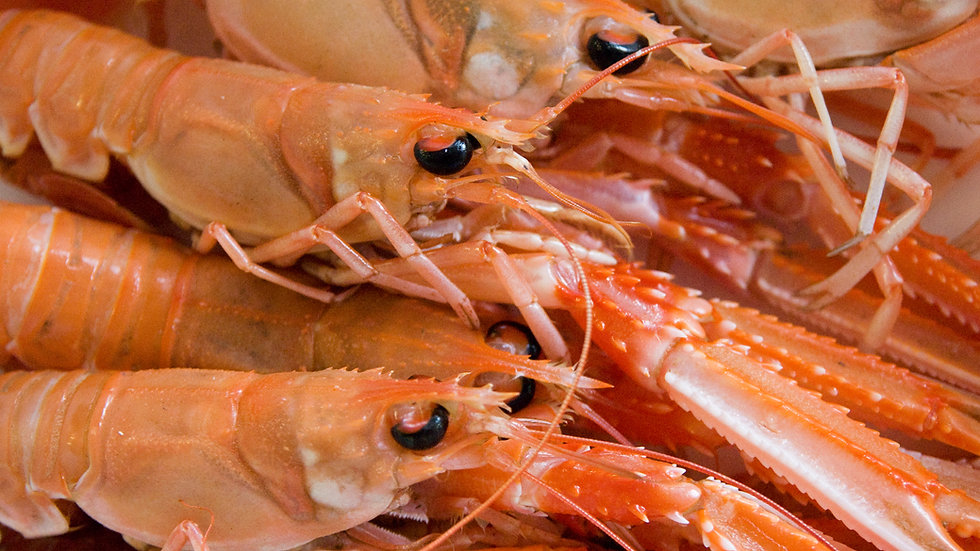 Fresh Langoustines 500g (approx 6)