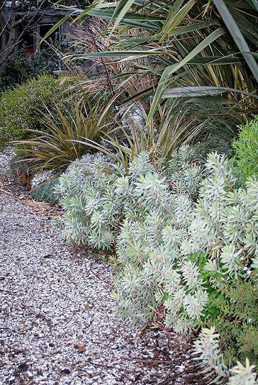 natural coastal garden design with grasses and shrubs