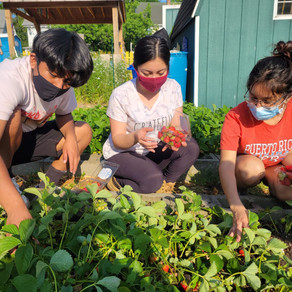 CATA'S Youth Food Justice Crew