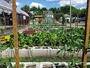 GardenPlants.jpg