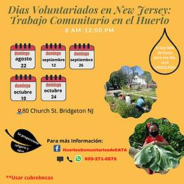 Insta Dias de Trabajo-Bridgeton FAll 2021.png