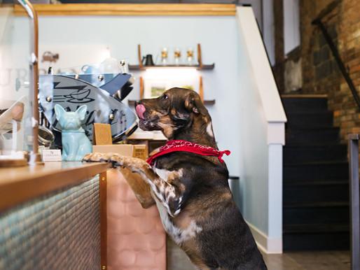 Published: Dog-friendly Coffee Shops on Cincinnati Refined