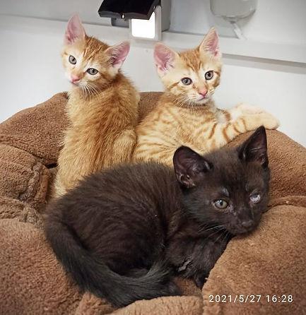 kitten2021.jpg