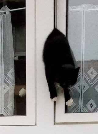 Kippfensterkatze.jpg