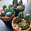 Thumbnail: Cactus Garden (party for 2 people)